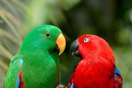Do All Parrots Mate for Life?