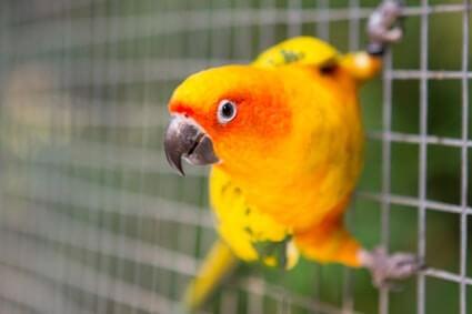 Do Parrots Make A Mess?
