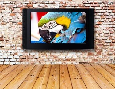 TV shows for parrots