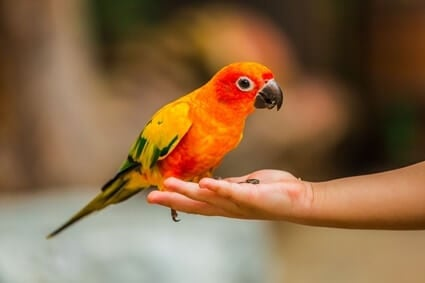What Does It Mean When Your Parrot's Feet Are Hot?