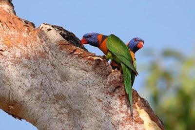 Where Do Parrots Make Their Nests?