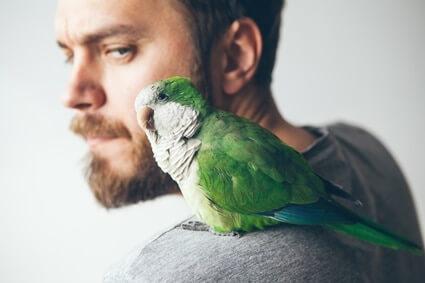 are parrot bites dangerous?