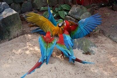 are parrots aggressive?