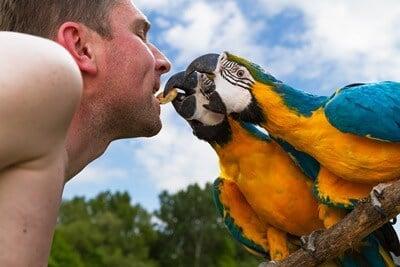 are parrots dangerous to humans?