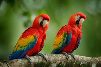 are parrots legal in California?