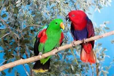 are parrots monogamous?