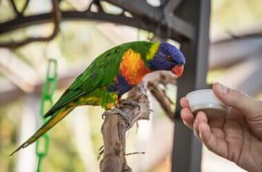 awesome names for parrots