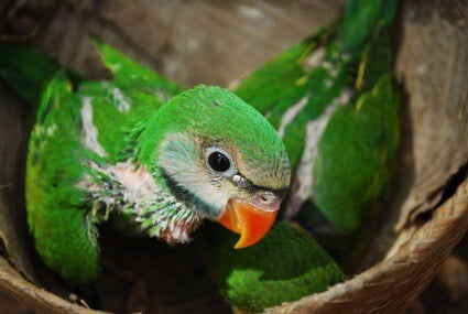 baby parrot not eating food