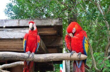big parrot types