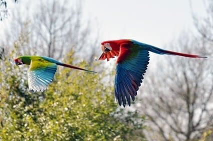 can I let my parrot fly outside?