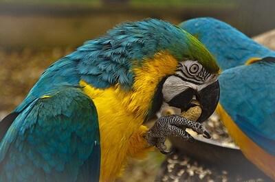 can a parrot's beak break?