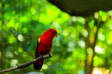 can parrots eat bugs?