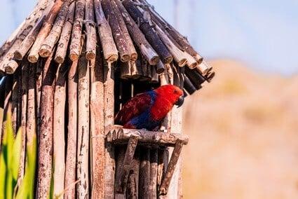 can parrots get sunburn?