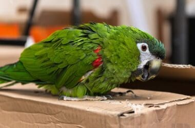 can parrots have cardboard?