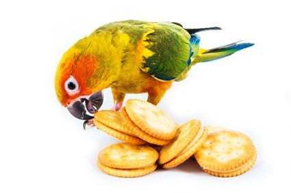 can you feed parrots crackers?