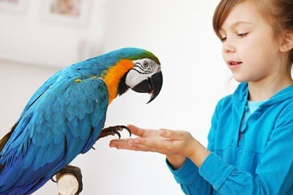 caring for a macaw parrot