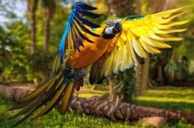 clip parrots wings or not