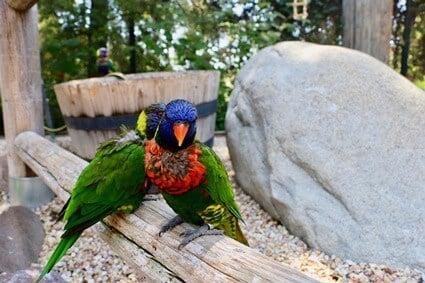 do birds feel jealousy?