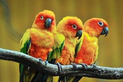 do parrots blink?