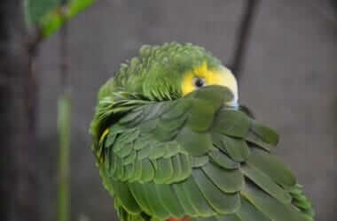 do parrots get lonely?