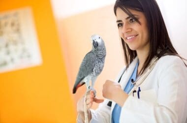do parrots get worms?