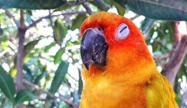 do parrots have nightmares?