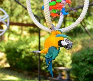 do parrots like being in the sun?