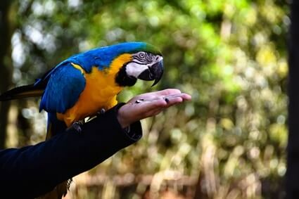 do parrots love their owners?