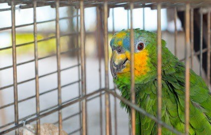 do parrots mourn the loss of another bird?