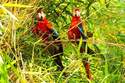 do parrots pair for life?