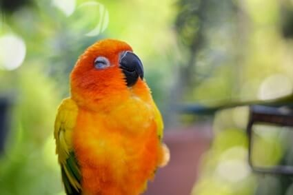do parrots sleep during the day?