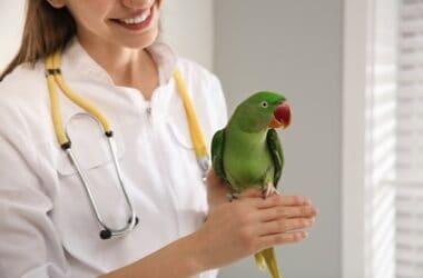 do veterinarians treat parrots?