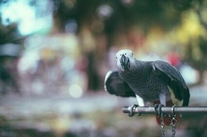 dreams involving parrots