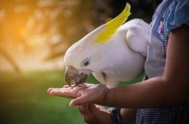 foods parrots can't eat