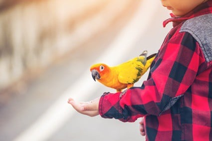 foods that are bad for parrot