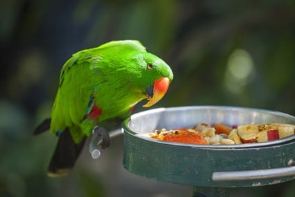 foods that are toxic for parrots