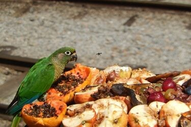 fruits that are good for parrots