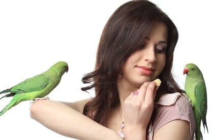getting a second parrot