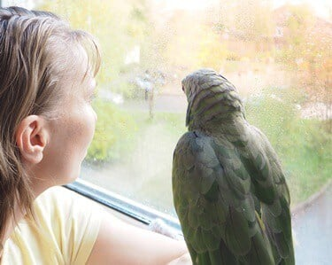 grieving process for a parrot
