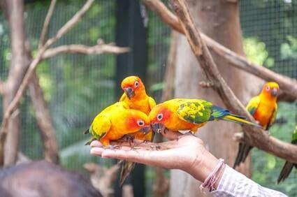 how do birds show affection to humans?