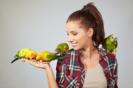 how do parrots show affection to humans?