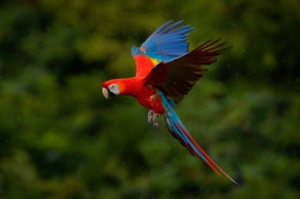 how do parrots survive in the wild?