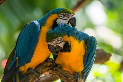 how does a parrot adapt in the rainforest?