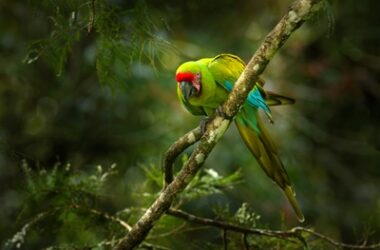 how does a parrot adapt to its habitat?