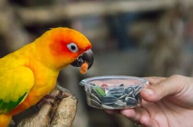 how does a parrot's digestive system work?