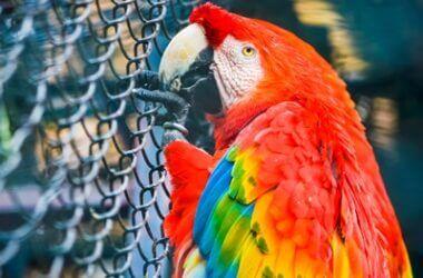 how long do parrots grieve?