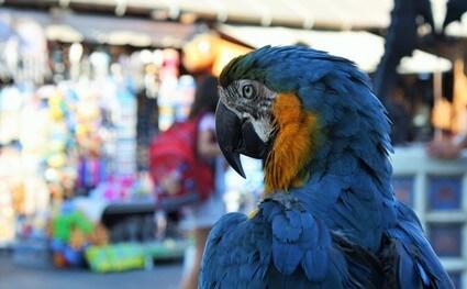 how long do parrots live?