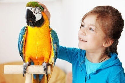 how much attention do parrots need?