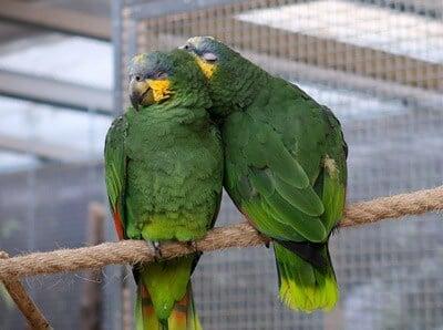 how much do parrots sleep?