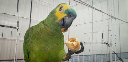 how often should I clean my parrot's cage?